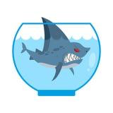 在水族馆的鲨鱼 与大牙的恼怒的海洋掠食性动物 家 免版税库存照片