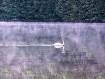 在水日落摩泽尔河反射的树的天鹅在Toul法国营地附近的 免版税库存图片