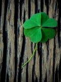 在破旧的木背景的三叶草叶子 象征性四 库存图片