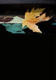 在破旧的长凳的橙色槭树 秋天时间卡海报模板 免版税库存照片