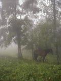 在黎明前雾的马 免版税库存照片