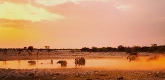 在黄昏的一充满活力的waterhole在有大象的Etosha 图库摄影