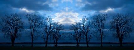在黄昏的树 免版税库存图片