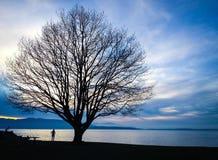 在黄昏的树silhoutte由水 免版税库存图片