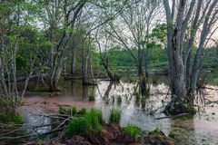 在黄昏的沼泽风景 库存图片