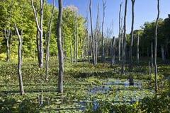 在黄昏的沼泽 免版税图库摄影