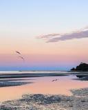 在黄昏的海鸥在海岸 库存图片