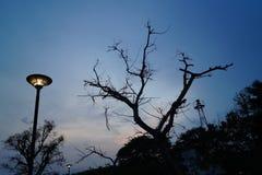 在黄昏的街灯 免版税库存照片