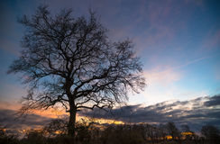 在黄昏的鬼的树 免版税库存照片