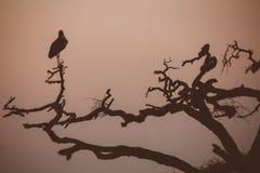 在黄昏的鸟 免版税库存照片