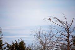 在黄昏的鸟 免版税图库摄影