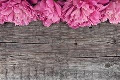 在黑暗的土气木背景的桃红色牡丹花与拷贝温泉 免版税库存图片