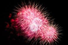 在黑暗的天空背景的桃红色烟花显示 免版税库存图片