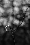 在黑暗的弯曲的枝杈与spotlihgt 库存图片