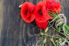 在黑暗的木背景的开花的野生鸦片 墙纸 免版税库存照片