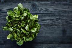 在黑暗的木foodie生活方式的绿色有机沙拉 库存照片