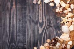 在黑暗的板条背景的海壳 图库摄影