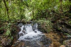 在黑暗的森林瀑布和植被的小瀑布在Bwindi难贯穿的森林里面 免版税库存图片