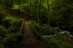 在黑暗的森林里 免版税库存照片