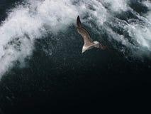 在黑暗的海鸥 免版税库存照片