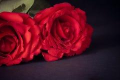 在黑暗的背景、情人节和爱概念的两朵玫瑰 库存图片