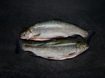 在黑暗的背景的两条未加工的鳟鱼鱼 免版税库存图片