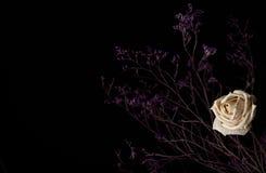 在黑暗的背景的凋枯的白色玫瑰 库存图片