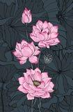 在黑暗的背景的桃红色莲花 库存照片
