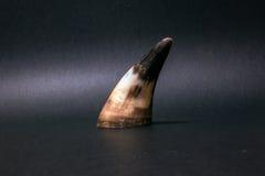 在黑暗的背景的母牛垫铁 免版税图库摄影