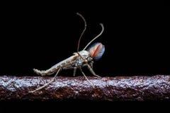 在黑暗的背景的用羽毛装饰的蚊子 免版税库存照片