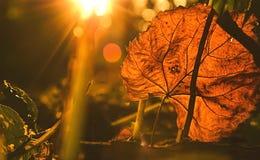 在黑暗的背景的秋天叶子 图库摄影