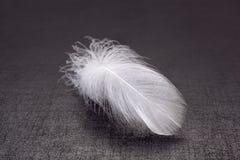 在黑暗的背景的轻量级羽毛 库存照片