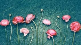 在黑暗的绿松石土气背景的美丽的桃红色花 图库摄影
