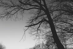 在黑暗的结构树 免版税库存图片