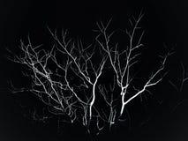 在黑暗的结构树 免版税库存照片