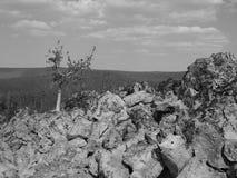在黑曜石领域的分叉的树 免版税图库摄影