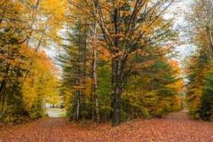 在10月下旬颜色的县路 库存图片