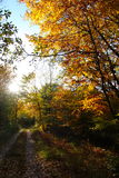 在11月太阳的森林足迹 图库摄影