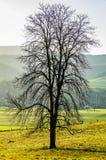 在11月薄雾的偏僻的树 免版税图库摄影