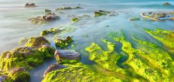 在晴朗海岸的青苔的美丽的海滩 免版税库存图片