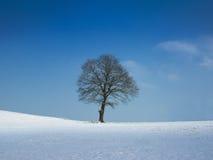 在晴朗的冬日的结构树 免版税库存图片