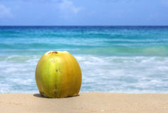 在晴朗的加勒比海滩的椰子 免版税图库摄影