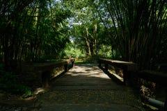 在晴朗的夏天下午遮荫竹子的木桥  库存图片