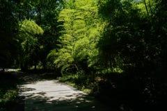 在晴朗的夏天竹子的被遮蔽的道路  免版税图库摄影