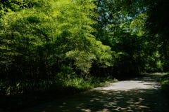 在晴朗的夏天竹子的遮荫道路  库存照片