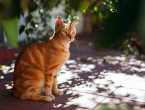 在晴朗的大阳台的红色猫 免版税库存照片