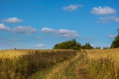 在晴朗的天气的领域在秋天 图库摄影