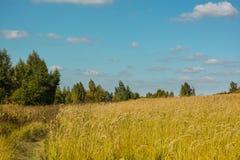 在晴朗的天气的领域在秋天 库存照片