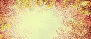 在晴朗的天空,抽象自然背景,网站的横幅的秋天叶子 免版税库存图片