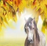 在晴朗的秋天叶子背景的灰色马  库存图片